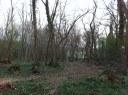 Nettoyage des bois communaux